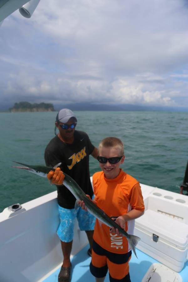 Needle Fish in Costa Rica