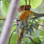 Thursday Things – Manuel Antonio Costa Rica