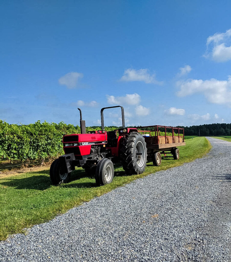 Tractor ride at the soybean farm