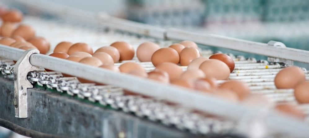 eggs on a conveyer belt