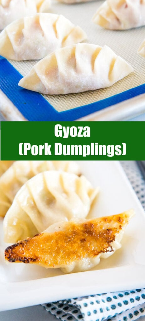 college of cooked gyoza